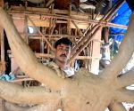 Durga Puja preparations