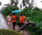 Free photo : Andhra rains tree fall on road.