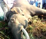 Assam farmer gets over 3 years' jail for wild elephant's death
