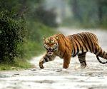 Assam to create 9 elephant corridors.