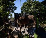 INDONESIA BALI MOUNT GUNUNG AGUNG EVACUATION