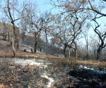 Karnataka forest fire under control: Official