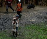 INDONESIA-BANDUNG-TRADITIONAL ANIMAL GAMES