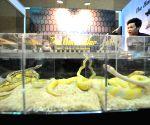 Bangkok (Thailand): Pet Variety And The City 2014