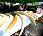 Thai customs officials display seized elephant tusks smuggled from Belgium to Thailand