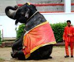 THAILAND BANGKOK ELEPHANT PAINTING
