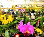 Bangkok (Thailand): 8th Siam Paragon Bangkok Royal Orchid Paradise