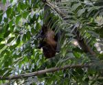 Why Covid-19 virus is not killing bats or making them sick