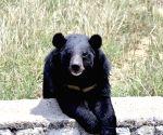 Bear mauls man to death in J&K's Budgam