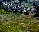 CHINA TERRACED FIELDS SCENERY