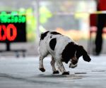 CHINA NANCHANG SAR DOGS COMPETITION