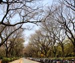 Cubbon Park during springs