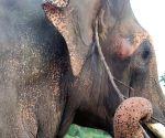 BJP leader killed by wild elephants near Guwahati