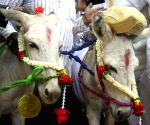 Donkeys get married on Valentine's Day