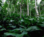 Woodland buffers help maintain bird communities in forest edges(Feature)