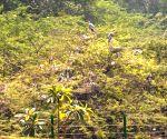 Gopal Rai visits Delhi Zoo