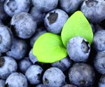 Import of US blueberries to India increases: USHBC