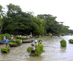 Floating plant market
