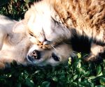 Boost your pet's health using Ayurveda