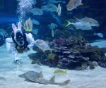 A scuba diver dressing up as an Easter rabbit searches for Easter eggs hidden in a shark pool at Tropicarium in Budapest