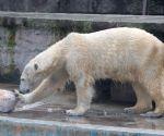 HUNGARY BUDAPEST ZOO POLAR BEAR