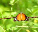 Haryana to conduct butterfly survey in Aravalli