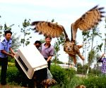 Volunteers from a wildlife rescue center examine an eagle owl