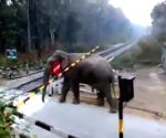 Video of elephant crossing track in  goes viral on Twitter