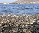Man Sagar Lake - carcass of fishes