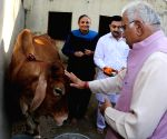 Haryana CM worships a cow