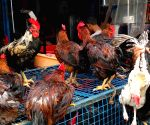 China lifts nearly 5-year ban on US poultry import