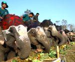 NEPAL CHITWAN ELEPHANT PICNIC