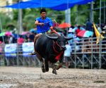 THAILAND CHONBURI BUFFALO RACING