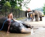 SRI LANKA KANDY ELEPHANTS BATH