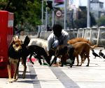 Stray dog lovers under attack: Now pregnant Russian woman in Noida