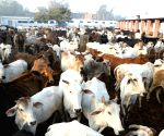 Government announces 'Kamdhenu Yojana' for cows