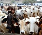 Government announces several schemes for cow welfare