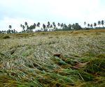 Cyclone 'Phethai' hits Andhra coast, triggers heavy rains