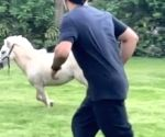 Free Photo: CSK skipper Dhoni 'tests his fitness' with a Shetland pony