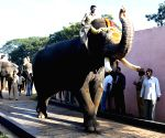 Dasara elephants in Mysuru