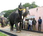 Dasara elephants