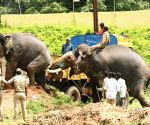 Dasara elephants receive grand farewell at Mysuru Palace