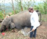 Death of 18 elephants in Assam due to 'lightning': Govt probe panel
