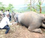 Death of 18 elephants in Assam 'mysterious', say experts
