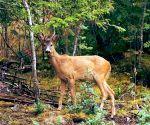 Deer hunted in Valmiki Tiger Reserve in Bihar, 1 held