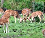 Deer at Assam State Zoo