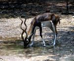 Hot Day - Deer be​a​t the heat at Delhi zoo