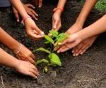 Village makes it mandatory for newlyweds to plant tree