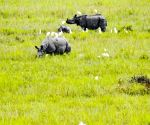 Despite pandemic, Kaziranga attracts 2 lakh tourists in 6 months