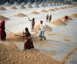 Dhaka (Bangladesh): HARVEST-RICE